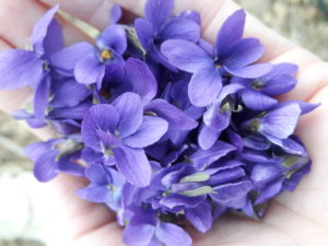 violets in hand